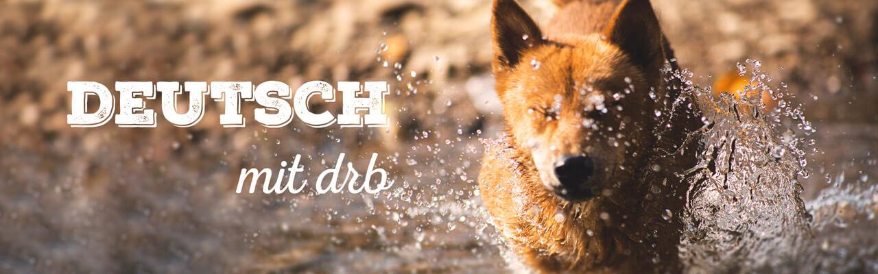 Плюсы немецкого с носителем языка: новое слово каждый день.